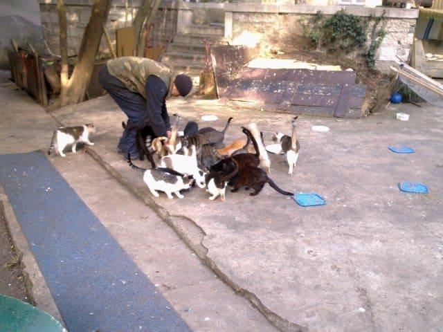Frau Radovčič, Istrien-live.com und Željko kümmern sich um streunende Katzen in Poreč. Foto: Maritta Radovčić