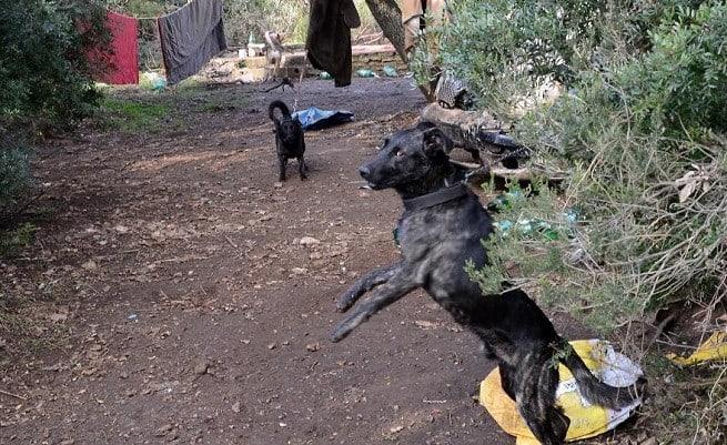 So leben die Hunde scheinbar schon seit Jahren. Foto: M. Angelini/GI