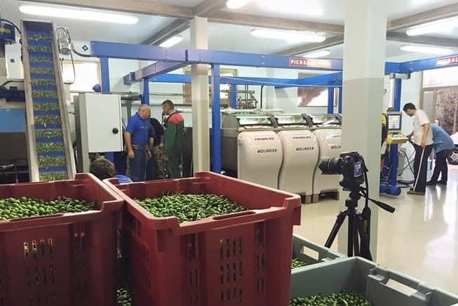 Mit die beste und modernste in Istrien, die Olivenölmühle von Agro Millo. FotoFacebook