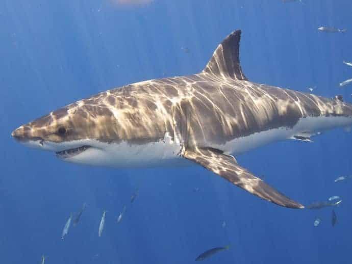 Hai Angriffe In Der Adria 11 Tote In 150 Jahren Video Und