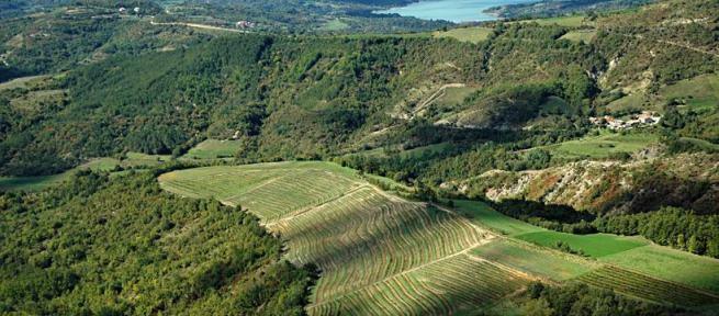 Die Weinhaine von Matošević in Zentralistrien. Foto: Matosevic.com