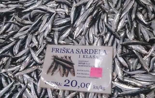 Kroatisch - Sardela/Srdela = Deutsch - Sardine. Alles klar? Foto: Enio Pašalić